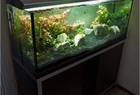 Открытый аквариум классической прямоугольной формы