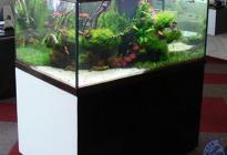 """Отдельностоящий аквариум """"Акватика"""". Оформление студии """"Аквадизайн""""."""